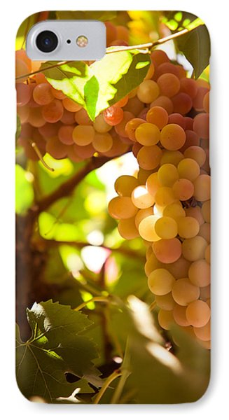 Harvest Time. Sunny Grapes IIi Phone Case by Jenny Rainbow