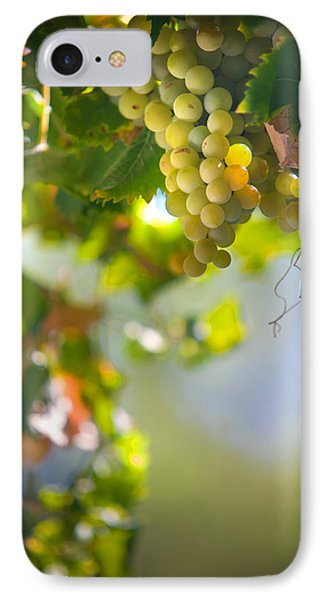 Harvest Time. Sunny Grapes V Phone Case by Jenny Rainbow