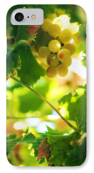 Harvest Time. Sunny Grapes Vii Phone Case by Jenny Rainbow
