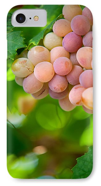 Harvest Time. Sunny Grapes Viii Phone Case by Jenny Rainbow