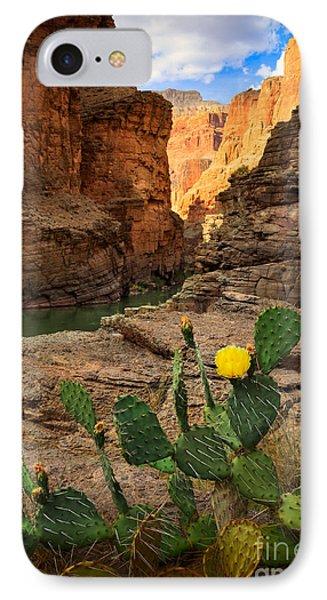 Havasu Cactus IPhone Case by Inge Johnsson
