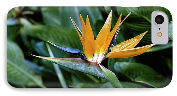 Hawaii Islands, Bird Of Paradise Flower IPhone Case by Douglas Peebles