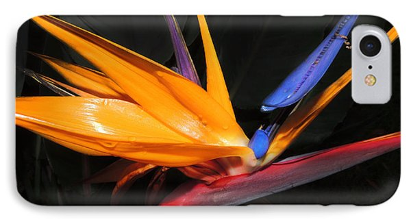 Hawaiian Bird Of Paradise IPhone Case by Kristine Merc
