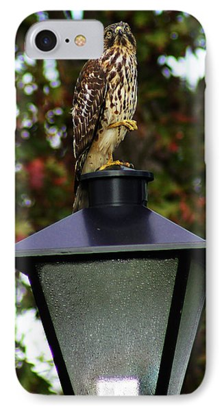 IPhone Case featuring the photograph Hawk Dancing by B Wayne Mullins