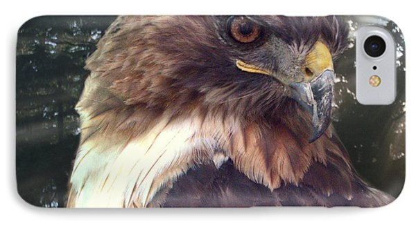 Hawk Eye - Wildlife Art Photography IPhone Case by Ella Kaye Dickey