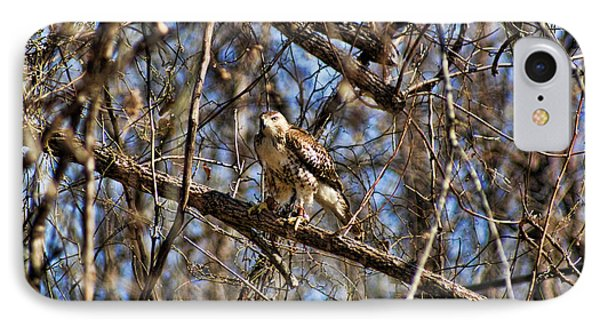 Hawk In A Tree IPhone Case by Rick Friedle