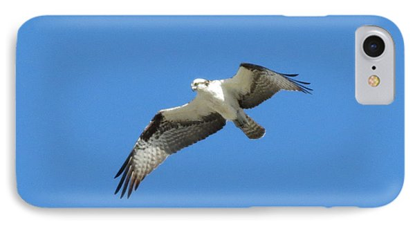 Hawk In Flight IPhone Case by Fortunate Findings Shirley Dickerson