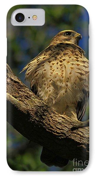 Hawk In Soft Light Phone Case by Deborah Benoit