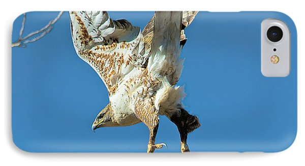 Hawk Lift Off IPhone Case by Stephen  Johnson