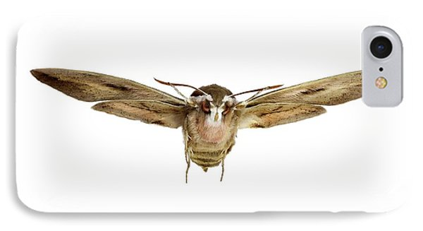 Hawk Moth In Flight IPhone Case by F. Martinez Clavel
