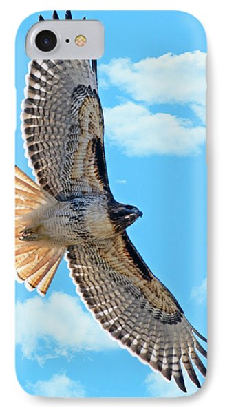 Hawk Overhead IPhone Case by Stephen  Johnson
