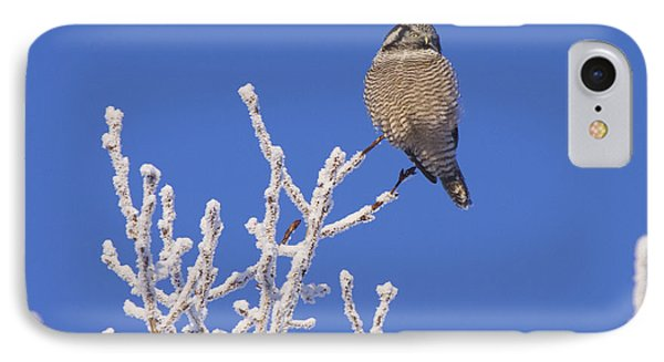 Hawk Owl Perched On Hoarfrosted IPhone Case by Doug Lindstrand