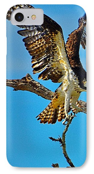 IPhone Case featuring the photograph Hawk's Heavy Load by Pamela Blizzard