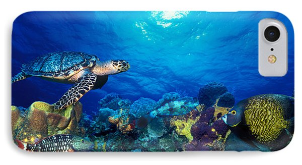 Hawksbill Turtle Eretmochelys Imbricata IPhone Case by Panoramic Images