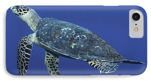 Hawksbill Turtle Phone Case by Paula Marie deBaleau