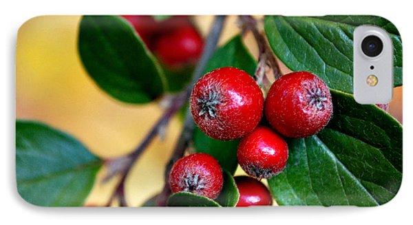 Hawthorn Berries IPhone Case by Kjirsten Collier