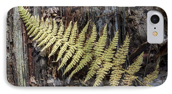 IPhone Case featuring the photograph Hay-scented Fern by Andrew Pacheco
