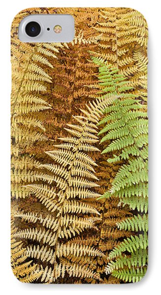 Hay-scented Ferns Phone Case by Alan L Graham