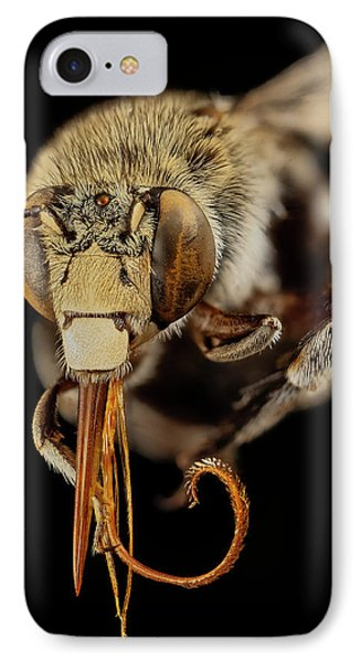 Head Of A Blue Banded Bee IPhone Case