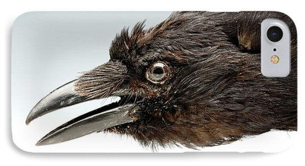 Head Of A Stuffed Carrion Crow IPhone Case