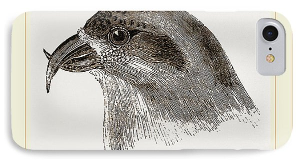 Head Of Crossbill IPhone Case by Litz Collection