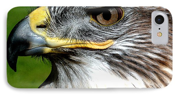 Head Portrait Of A Eagle IPhone Case