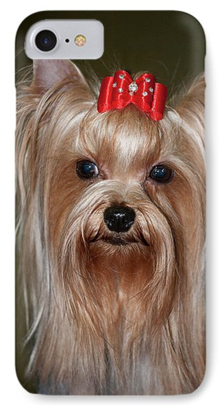 Headshot Of Show Yorkshire Terrier IPhone Case by Piperanne Worcester