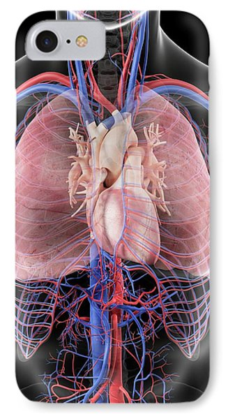 Heart And Lungs IPhone Case by Sciepro