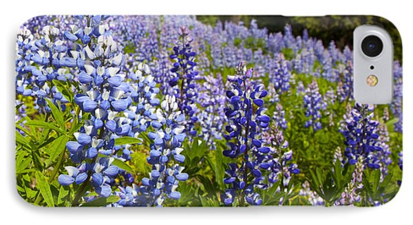 Heavenly Blue Lupins Phone Case by Theresa Tahara