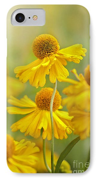 Helenium Butter Pat IPhone Case by Jacky Parker