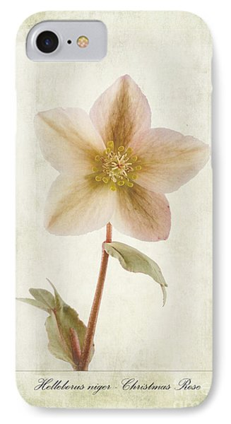 Helleborus Niger Phone Case by John Edwards