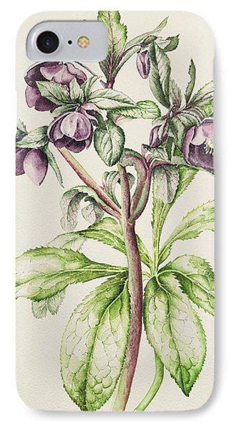 Helleborus Orientalis IPhone Case by Alison Cooper