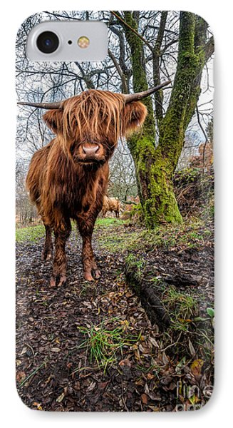 Hello Cow IPhone Case by Adrian Evans