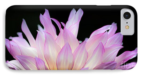 Hello Dahlia IPhone Case by Amy Fearn