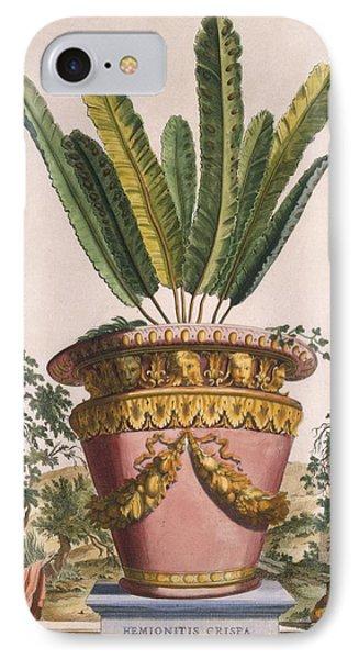 Hemionitis Crispa Media Obtusifolia IPhone Case by Abraham Munting