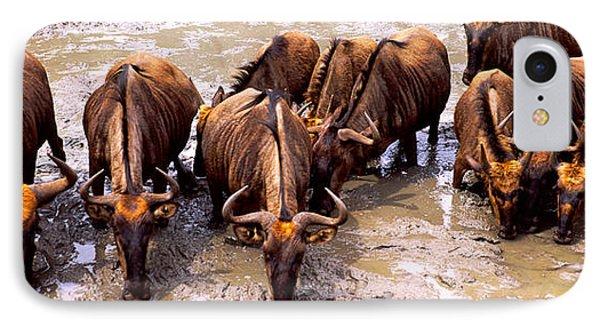Herd Of Blue Wildebeests Connochaetes IPhone Case by Panoramic Images