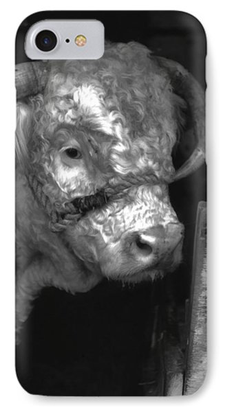 Hereford Bull In Black And White IPhone Case