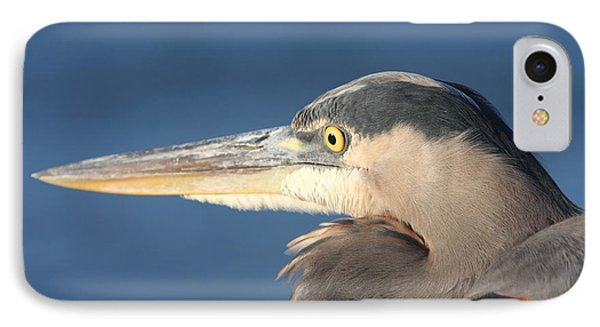 Heron Close-up IPhone Case by Christiane Schulze Art And Photography