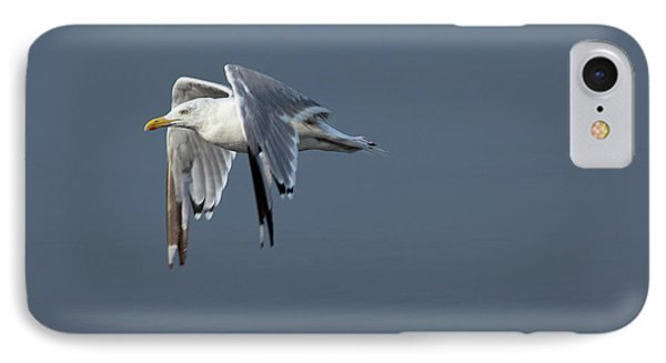 Herring Gull In Flight Phone Case by Karol Livote