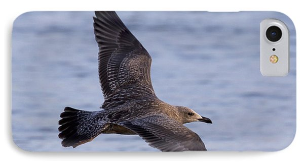 IPhone Case featuring the photograph Herring Gull In Flight Photo by Meg Rousher
