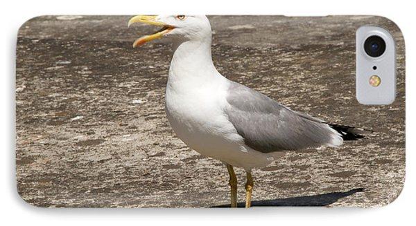 Herring Gull IPhone Case by Nigel Downer