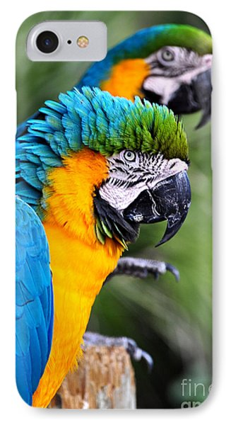 He's Always Hogging The Spotlight IPhone Case by Kathy Baccari