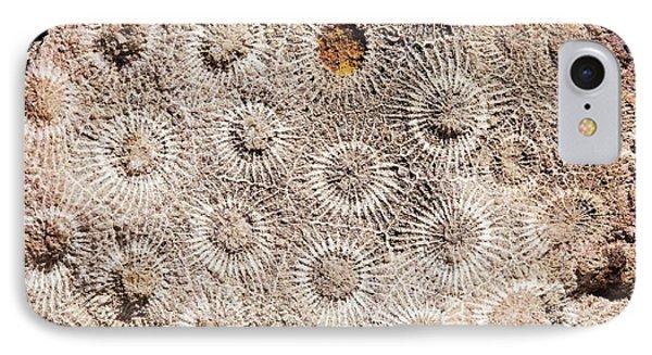 Hexagonaria Fossil Coral IPhone Case