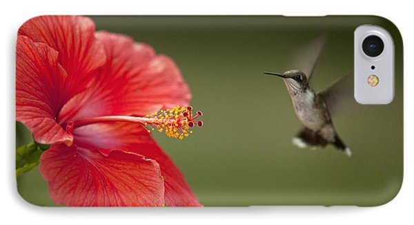 Hibiscus Hummingbird IPhone Case by John Crothers