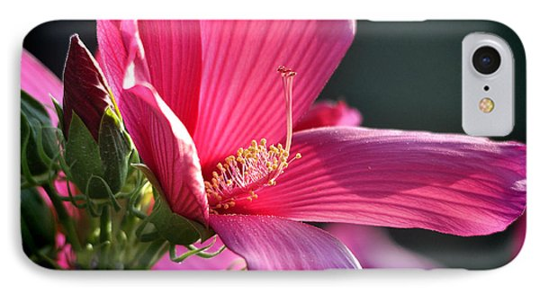 IPhone Case featuring the photograph Hibiscus Morning Bright by Nava Thompson