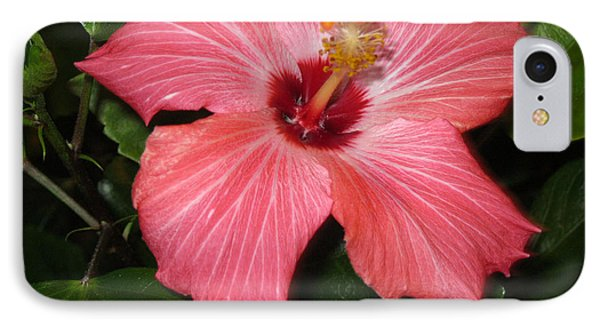 IPhone Case featuring the photograph Hibiscus by Oksana Semenchenko