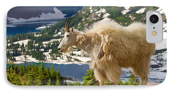 IPhone Case featuring the photograph Hidden Lake Goat by Aaron Whittemore