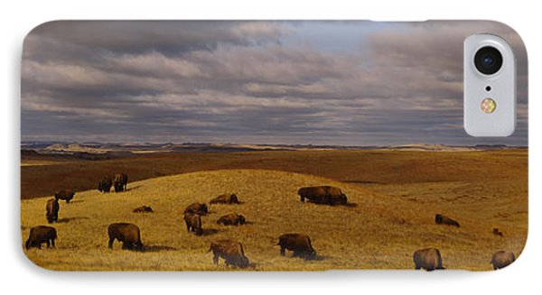 High Angle View Of Buffaloes Grazing IPhone Case by Panoramic Images