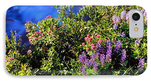 High Angle View Of Lupine And Spirea IPhone Case
