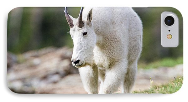 IPhone Case featuring the photograph High Country Mountain Goat by Jack Bell
